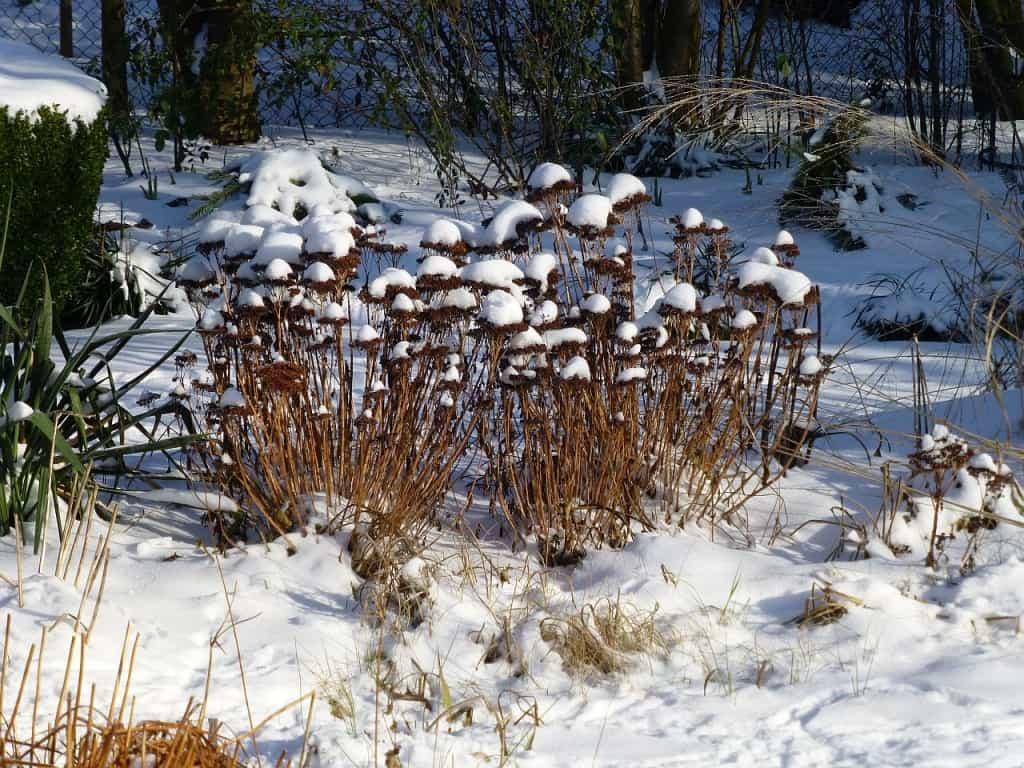 Blick in einen winterlichen Garten
