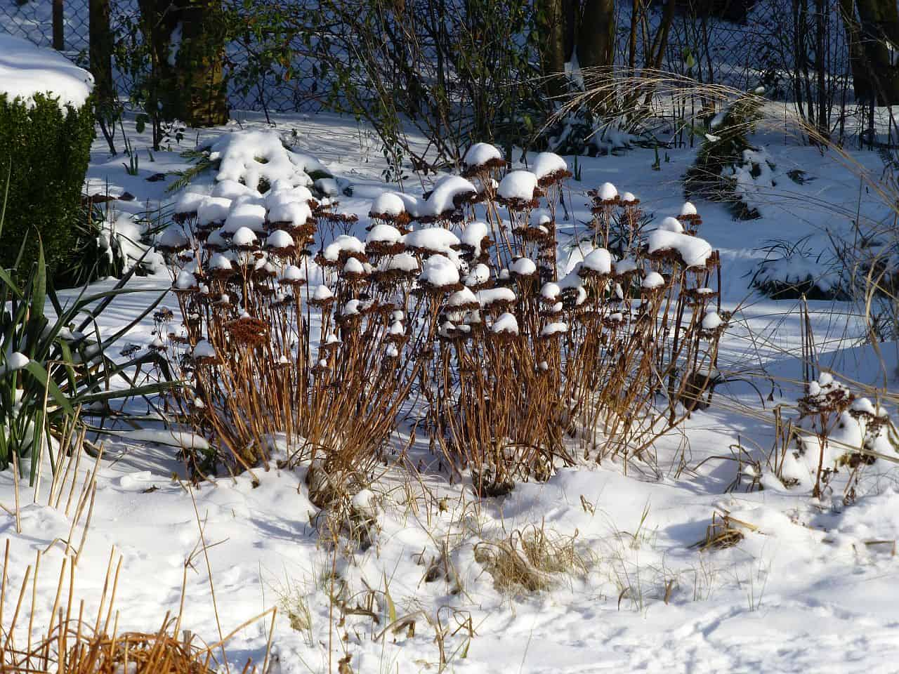 Der Garten Im Winter Und Was Zu Tun Ist Nachgeharkt