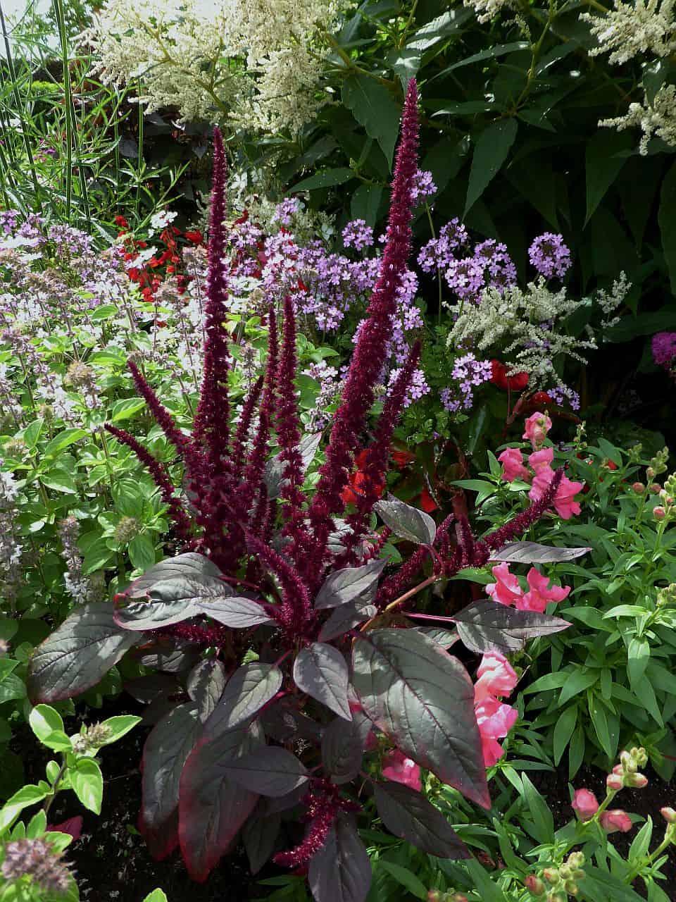 Gartenplanung – Die violette Rabatte