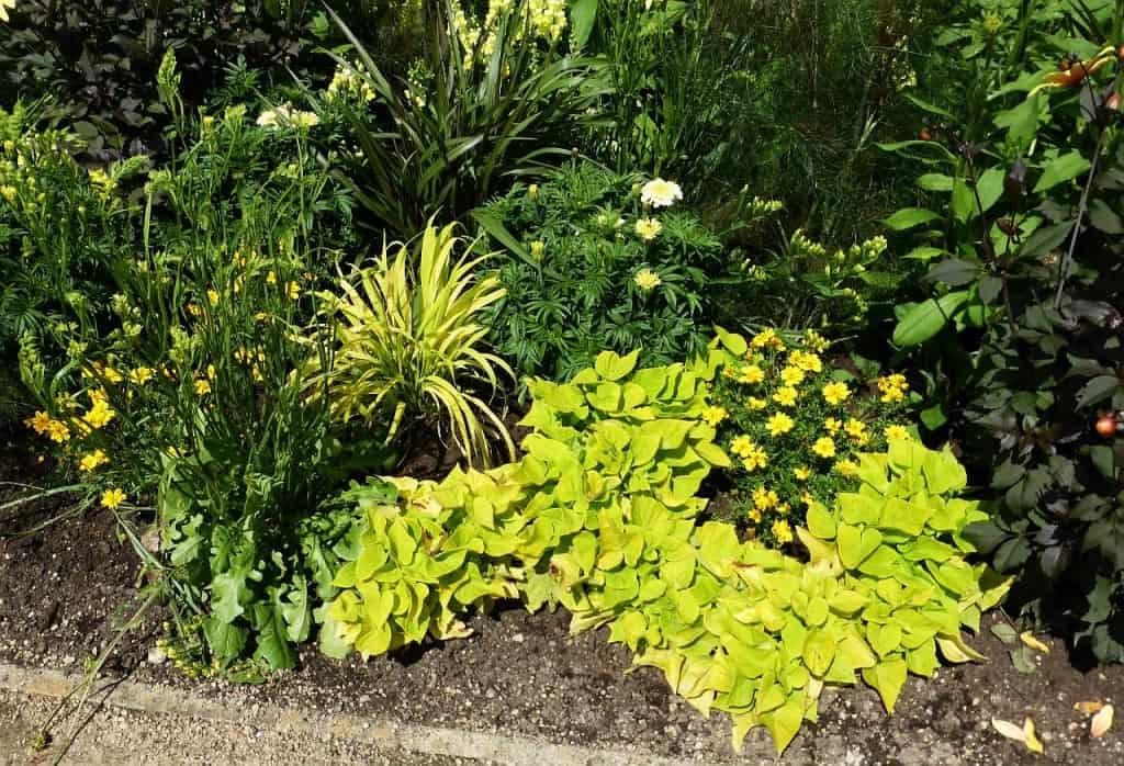 Verschiedene gelbe Pflanzen