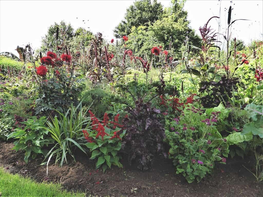 Rabatte mit roten Blüten
