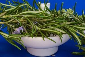Rosmarin richtig anpflanzen und ernten