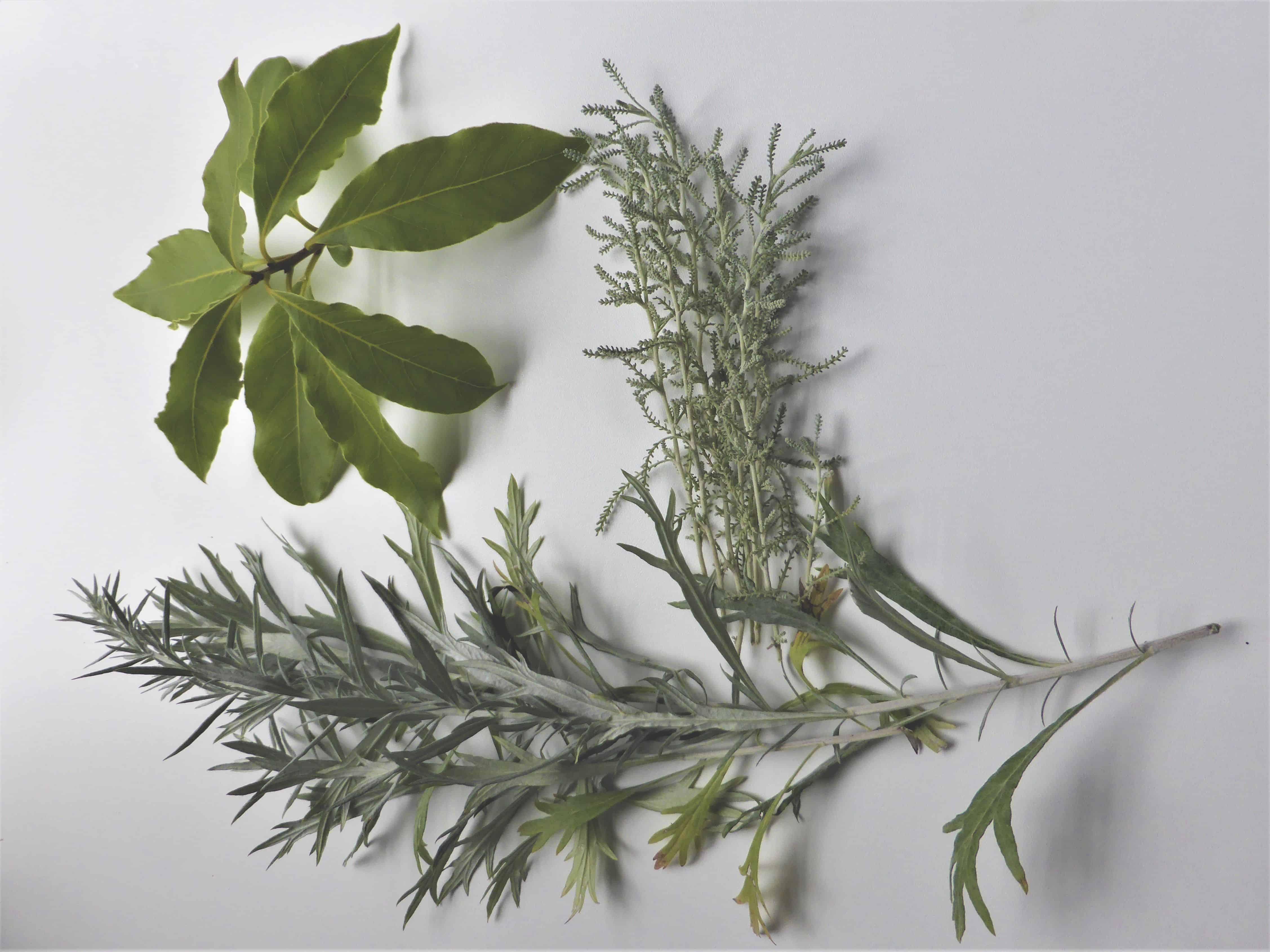 Artemisia, Santolina und Lorbeer