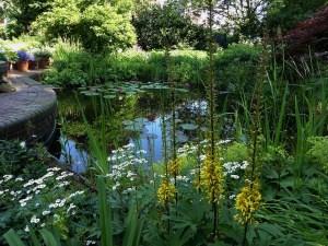 Wildblumen für den Garten