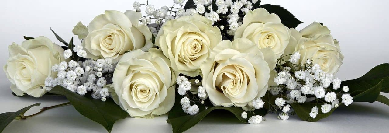 Schleierkraut – hier zusammen mit weißen Rosen