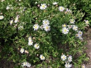 Blühende Pflanzen unter Bäumen