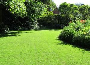 So wird vertrockneter Rasen wieder grün