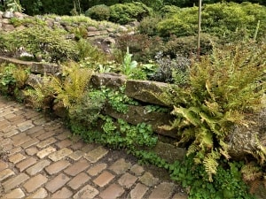 Pflanzen für schattige Mauerfugen