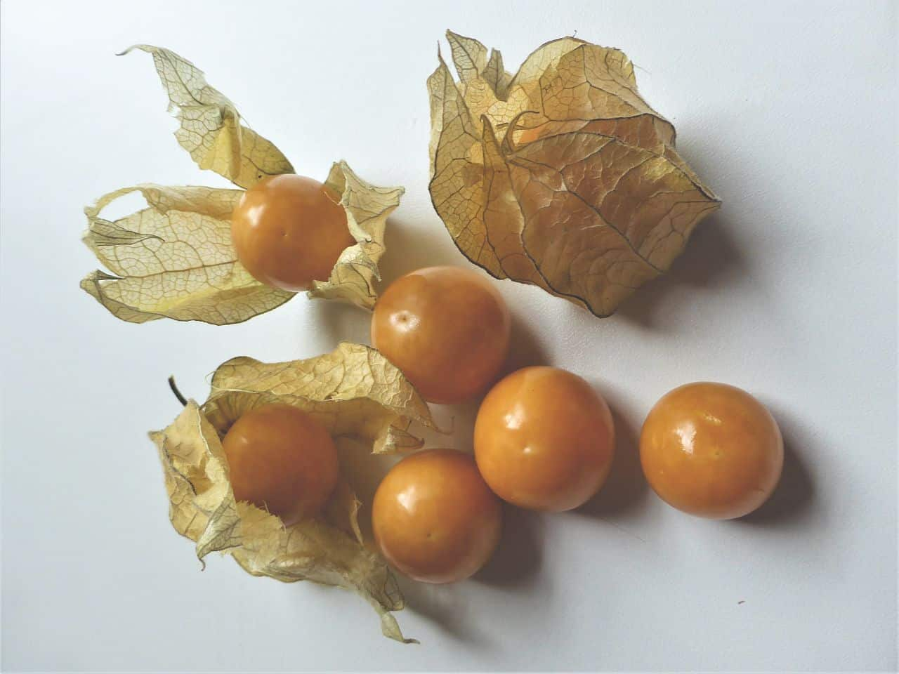 Reife Physalis