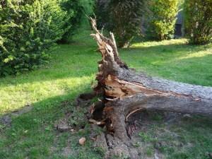 Haftung und Versicherungen – Wer zahlt bei einem Baumschaden?