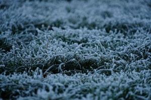 Der Rasen im Winter