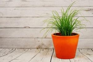 Zimmerpflanzen erfolgreich umtopfen