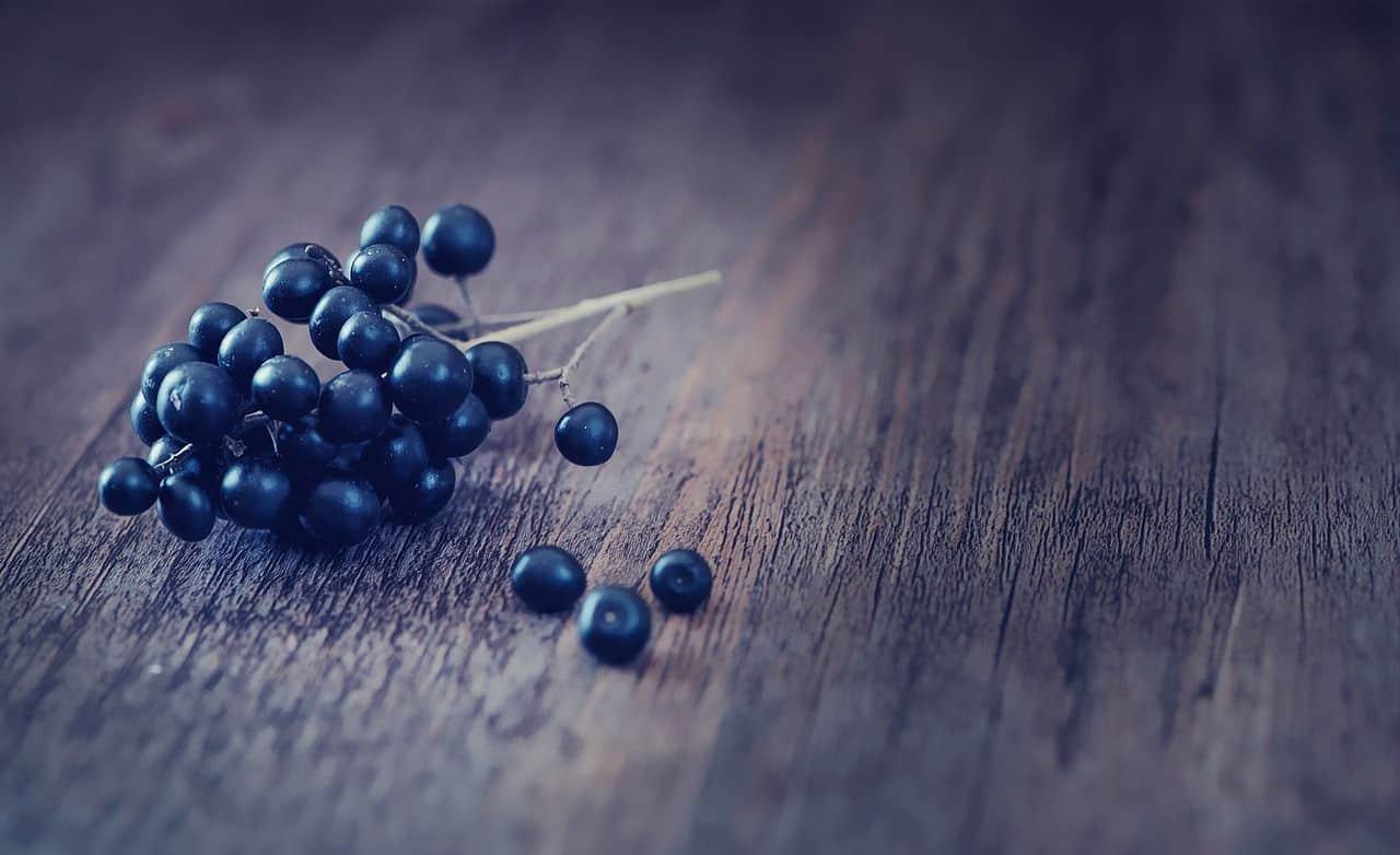 Blaue Beeren vom Liguster