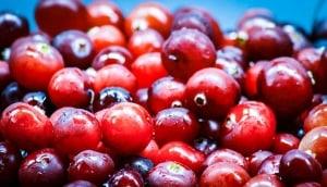Cranberrys im eigenen Garten anbauen