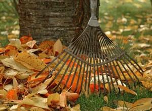 Gartenarbeit und Abnehmen – so viele Kalorien werden verbrannt