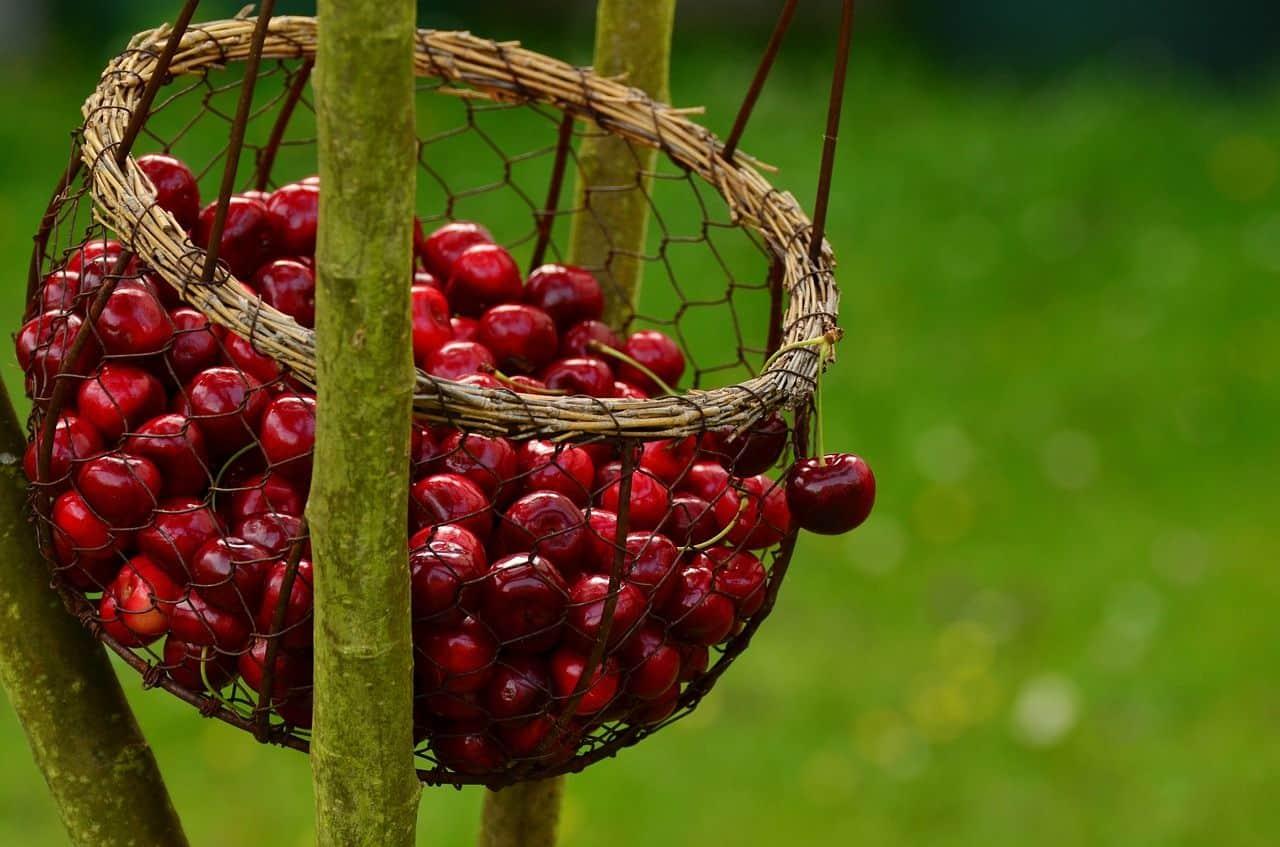 Der nachgeharkt-Erntekalender