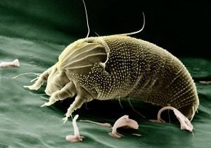 Schädlinge und Krankheiten bei Nutzpflanzen auf biologischem Weg bekämpfen
