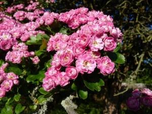 Die besten Bäume und Sträucher für kleine Gärten