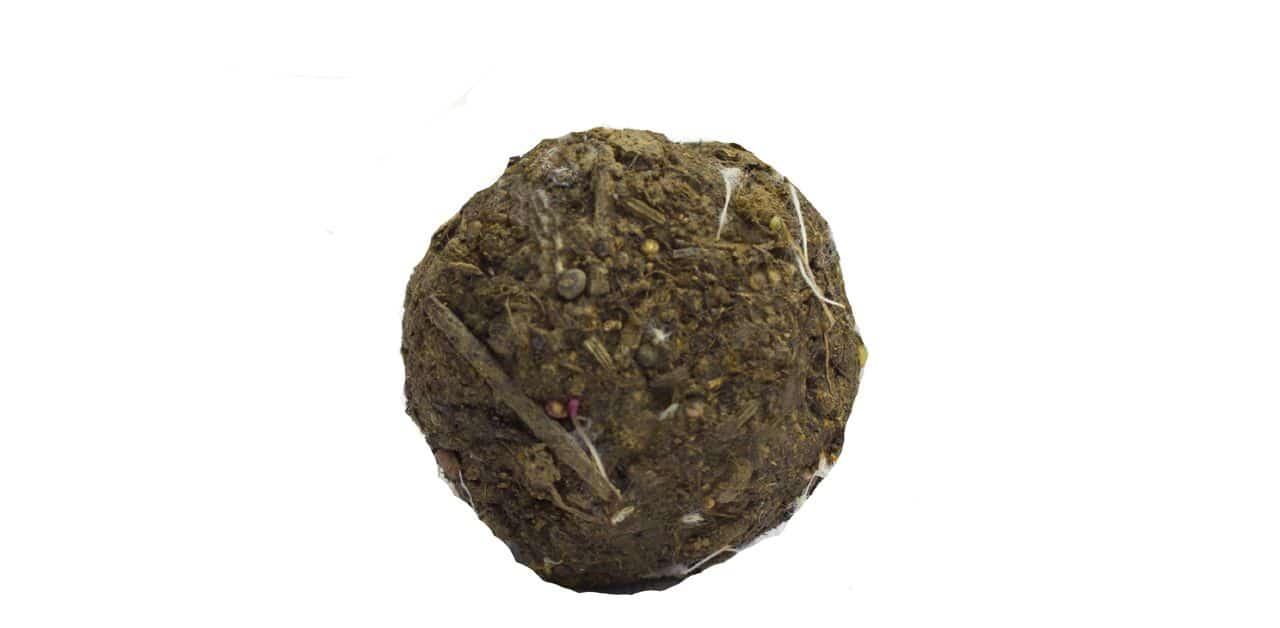 Eine Samenbombe