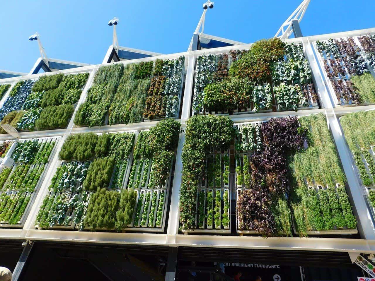 Ein beeindruckender vertikaler Garten