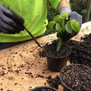 Vermehrung von Pflanzen – die wichtigsten Methoden