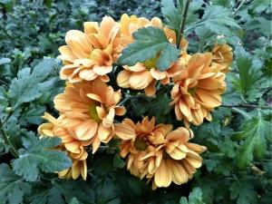 Sind biologische Pflanzenschutzmittel unbedenklich?