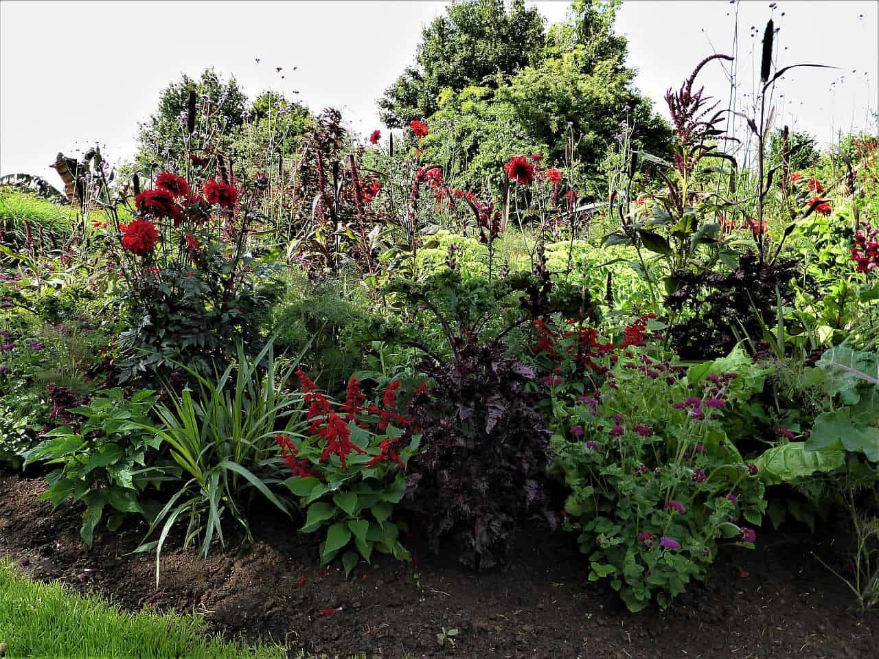 Pflanzen für den Herbstgarten