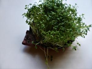 Keime, Sprossen und Microgreens