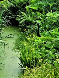 Das Sumpfbeet – Standort für wechselfeuchte Pflanzen