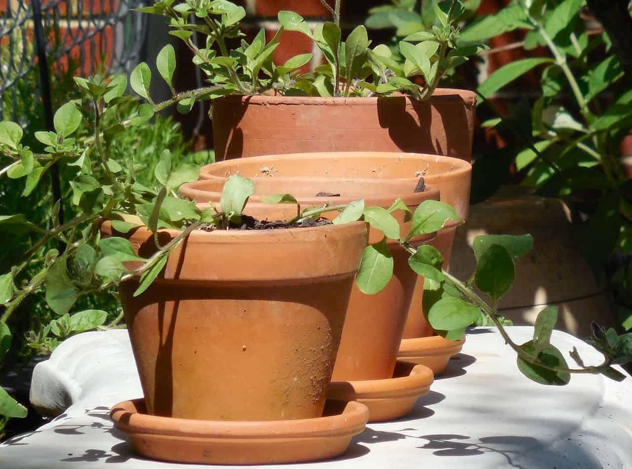 Drei Terrakotta-Töpfe mit Pflanzen
