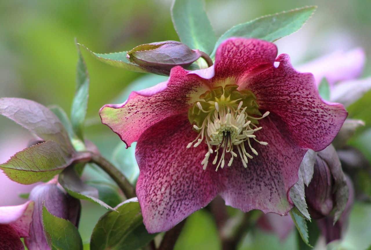 Herbst- und Winterbepflanzung für Blumenkästen
