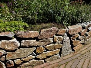 Trockenmauer – Lebensraum für wärmeliebende Pflanzen und Tiere
