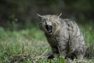 Wilde Katzen richtig füttern