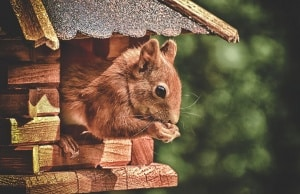 Ein Eichhörnchenhaus selbst bauen
