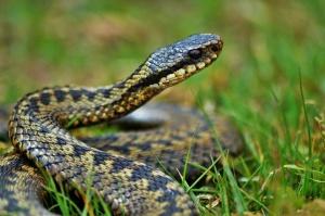 Eine Schlange im Garten – was nun?
