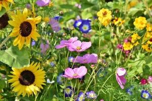 So legt man einen naturnahen Garten an
