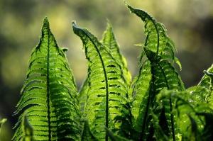 Das Terrarium richtig bepflanzen