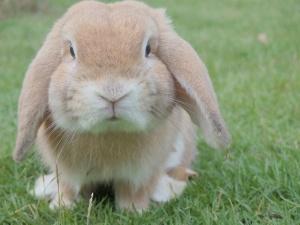 Kaninchen im Garten halten