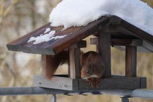Ein Vogelhaus selbst bauen