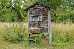 Einen insektenfreundlichen Garten anlegen