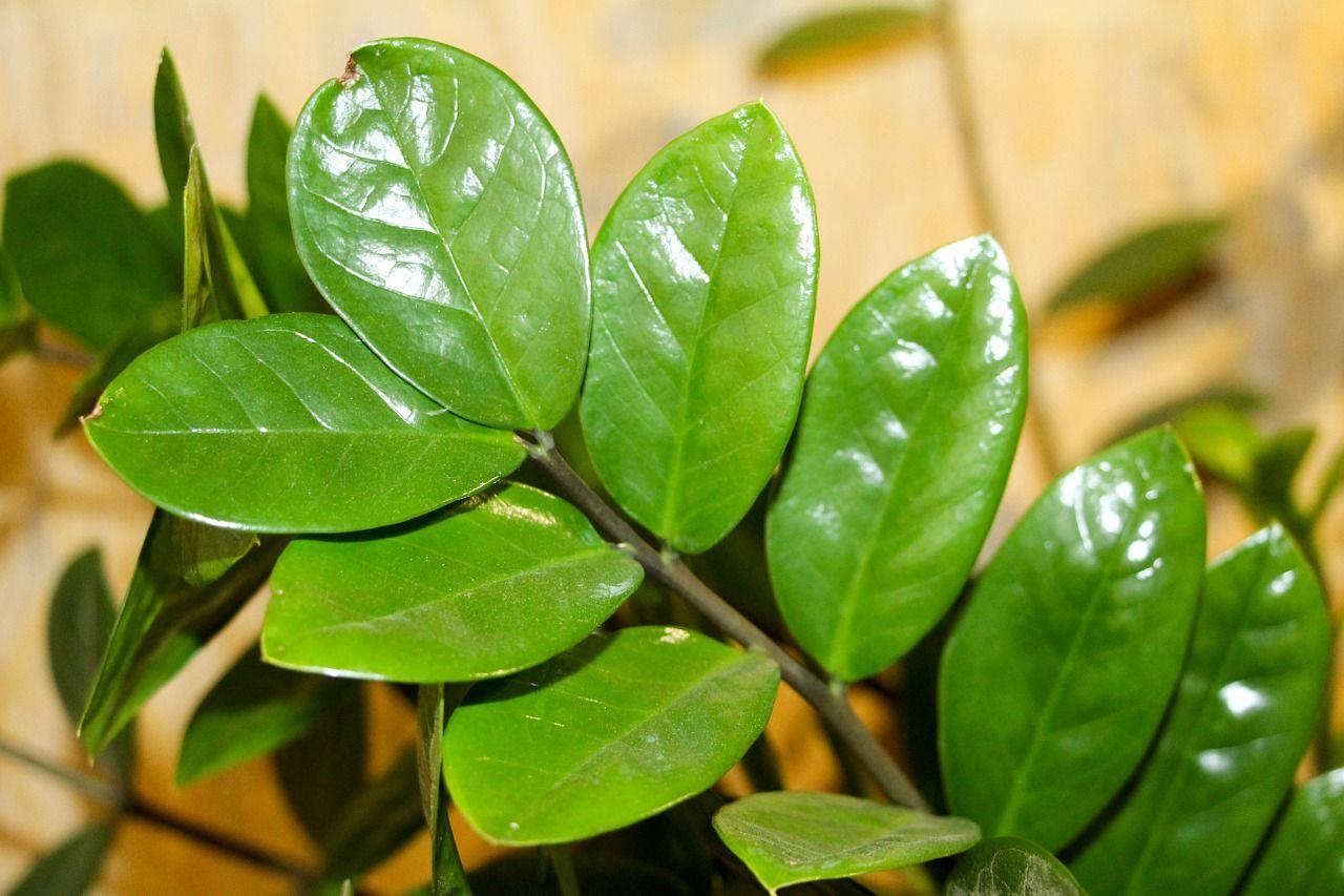Die Top 5 der pflegeleichtesten Zimmerpflanzen
