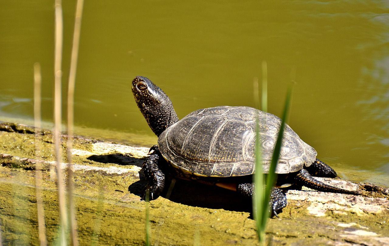 Schildkröten im Garten halten