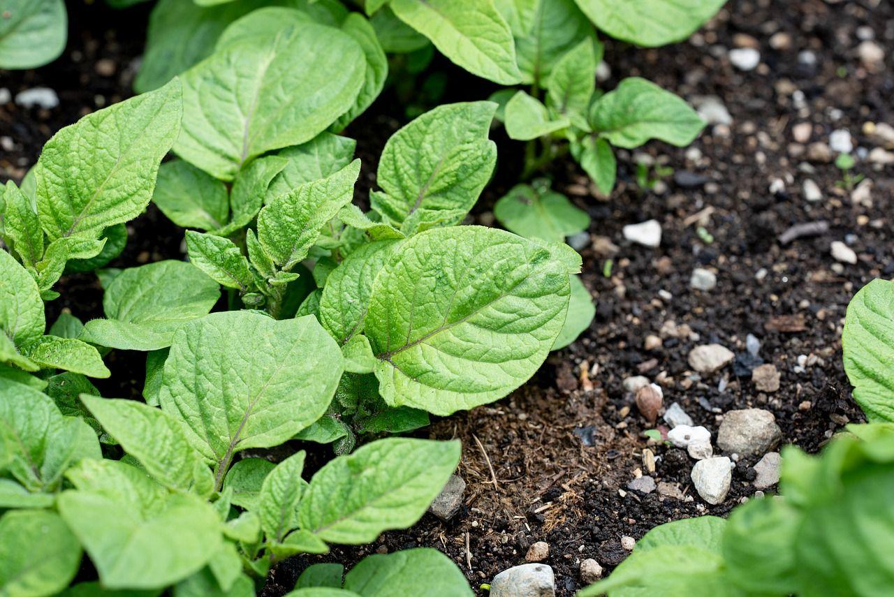 Den Gemüsegarten richtig bewässern