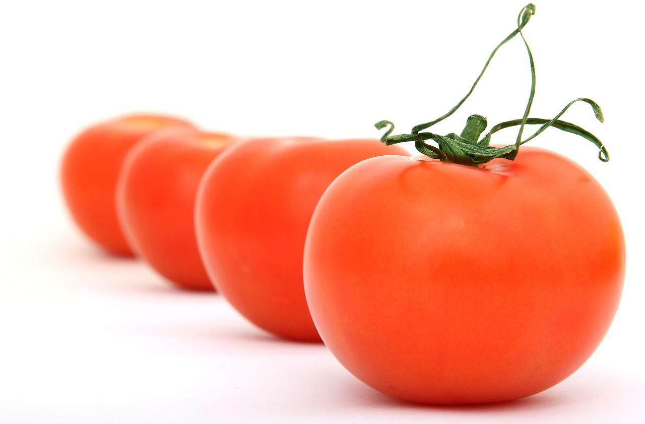 Die häufigsten Krankheiten bei Tomaten