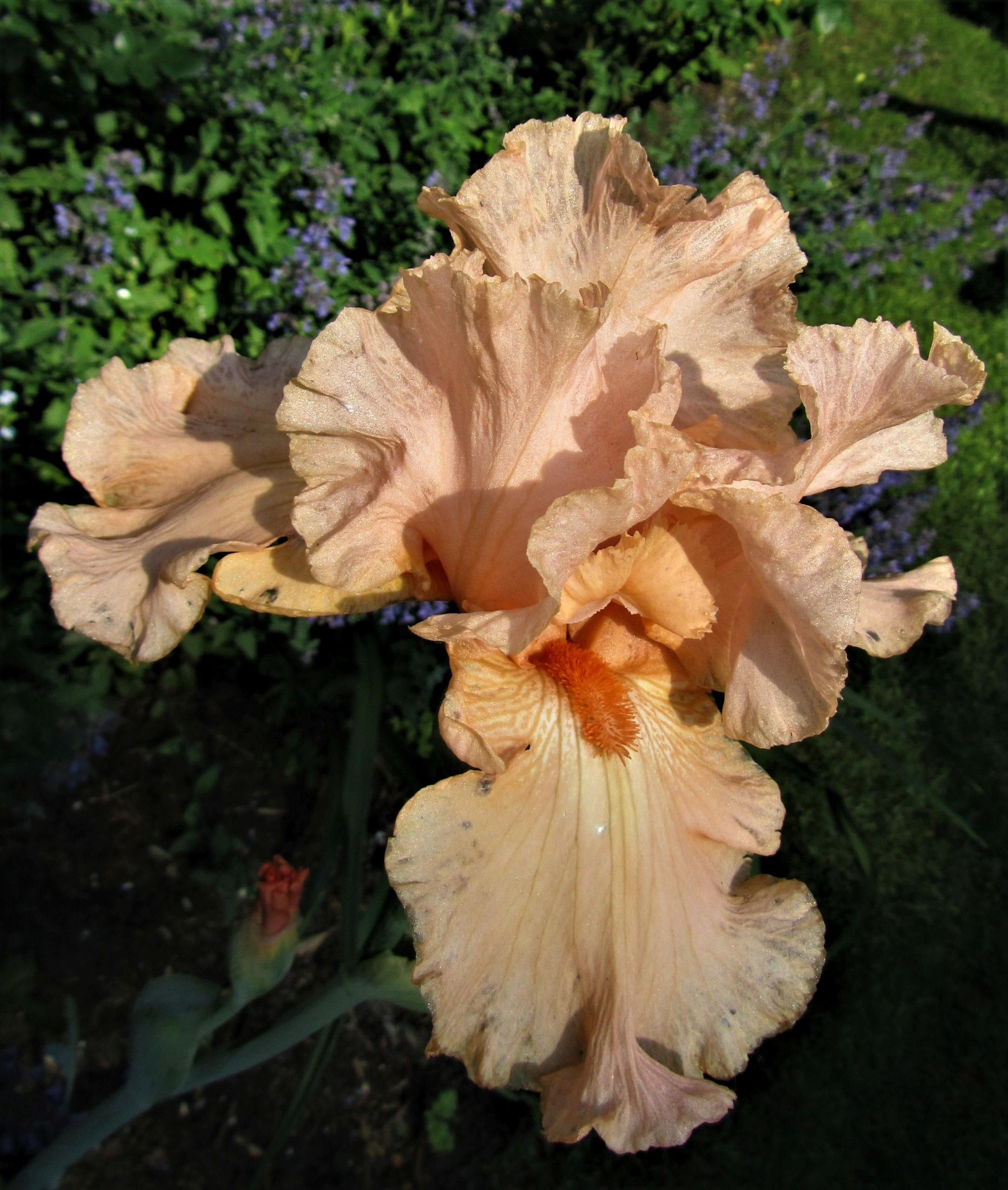 Iris für jeden Standort