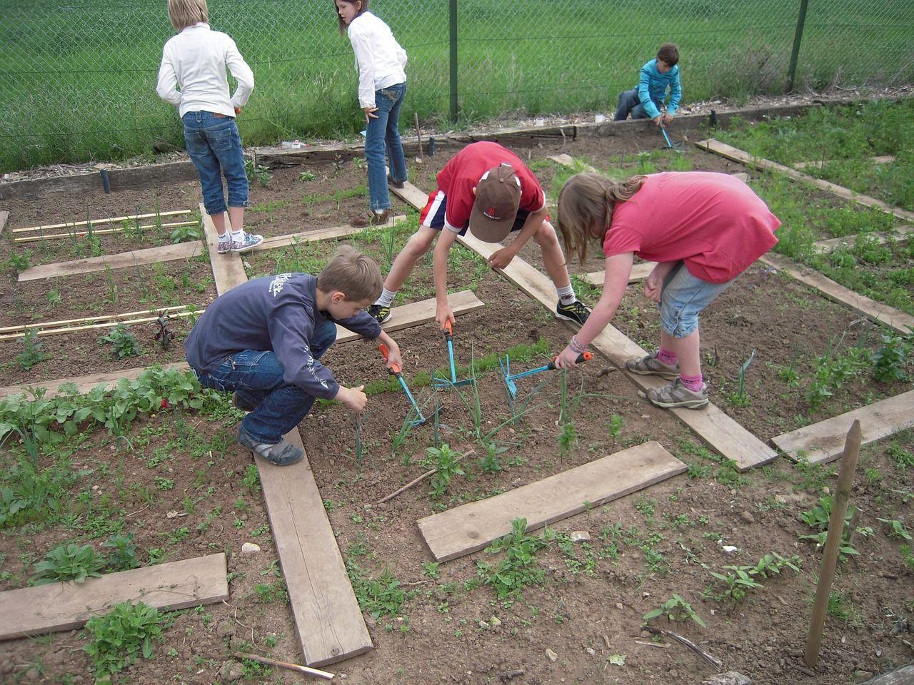 Read more about the article Was pflanzt man am besten im Schulgarten an?