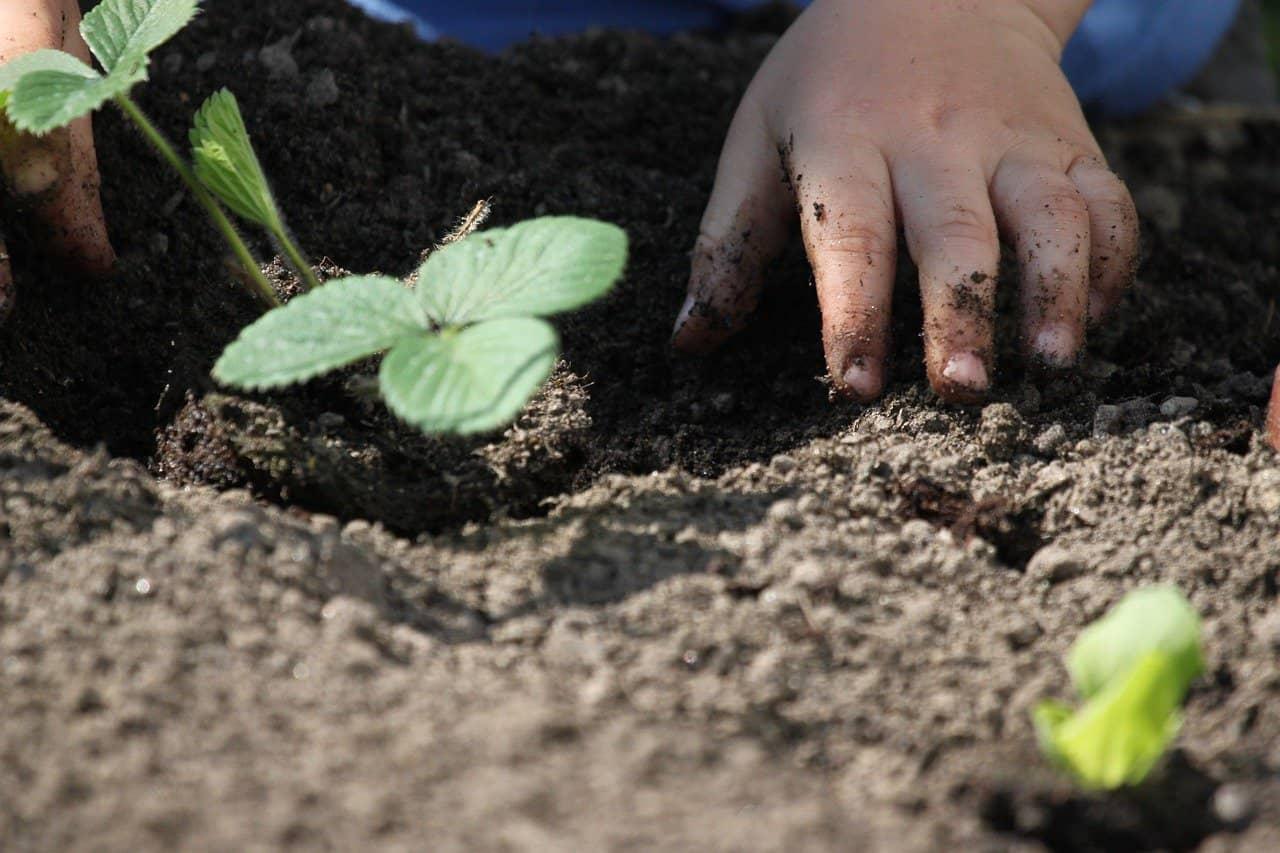 Read more about the article Gartenwissen – wichtiges Know-how für die Blütenpracht