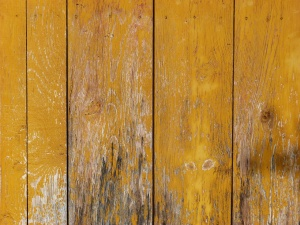 Schimmel und Stockflecken aus Holz entfernen