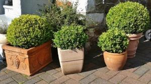 Anpflanzen in Pflanzkübeln – auch im Winter